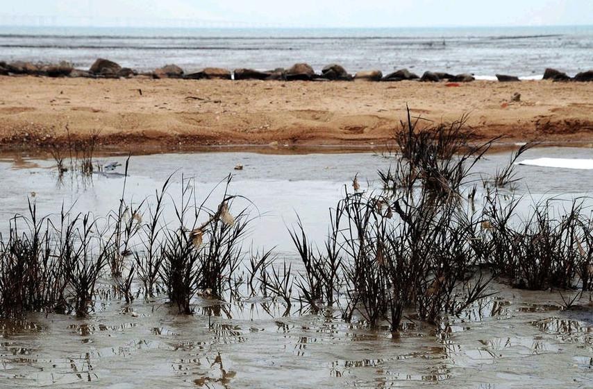 泄漏原油海滩海草和石头上还残存有原油